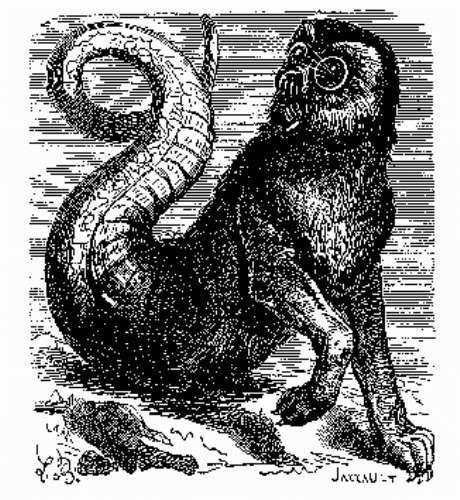 Amon demon
